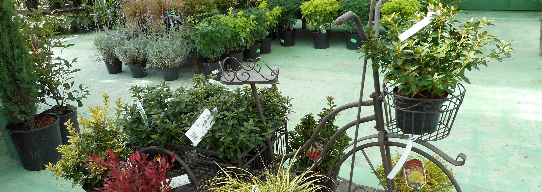 Vente de végétaux aux Serres de Poigny en Seine et Marne, 77