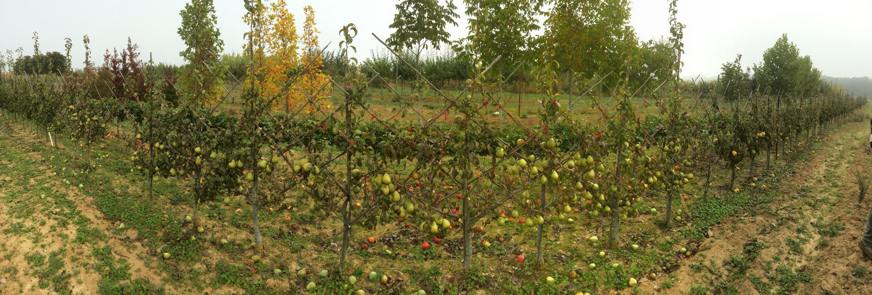 Arbre fruitier vente en Seine et Marne