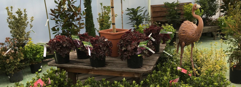 ETS FOURCART, vente de végétaux à Provins en Seine et Marne 77